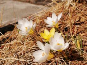 春がやってきますね